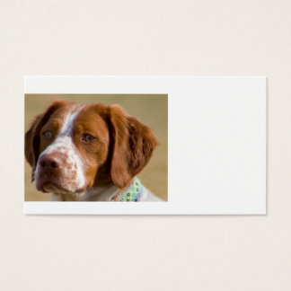 brittany-spaniel.png business card