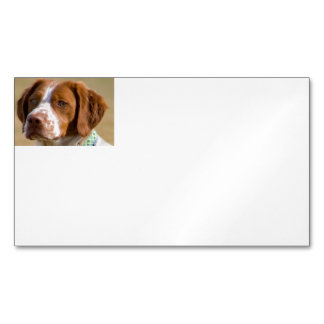 brittany-spaniel.png magnetic business card