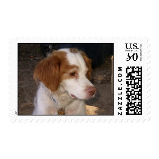 Brittany Spaniel Stamps