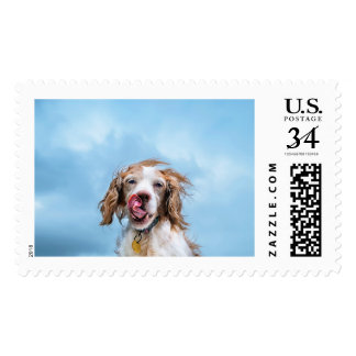 Brittany With Attitude Postal Stamp