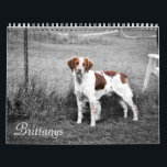 "Brittanys Calendar<br><div class=""desc"">A calendar feature photography of the dogs from New Horizon Brittanys</div>"