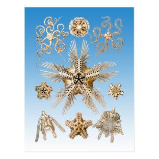 Brittle stars postcard