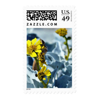 Brittlebush Encelia Farinosa Stamp