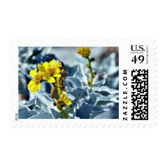 Brittlebush Encelia Farinosa Postage