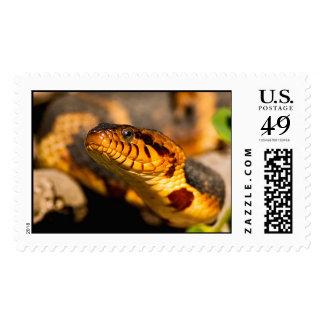 Broad-Banded Water Snake Postage Stamp