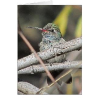 Broad-billed Hummingbird Stationery Note Card