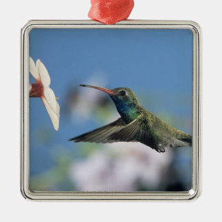 Broad-billed Hummingbird, Cynanthus 2 Square Metal Christmas Ornament
