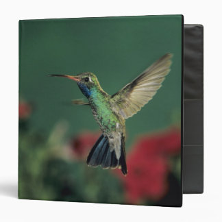 Broad-billed Hummingbird, Cynanthus 3 Ring Binder