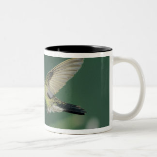 Broad-billed Hummingbird, Cynanthus latirostris, Two-Tone Coffee Mug