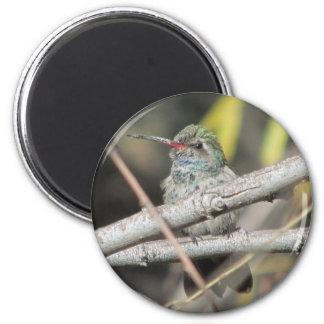 Broad-billed Hummingbird Magnet