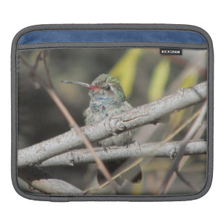 Broad-billed Hummingbird Sleeve For iPads