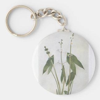Broad-Leaved Arrowhead - Sagittaria latifolia Keychain