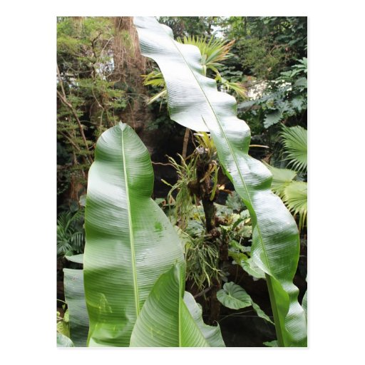 Broad Leaves Post Cards