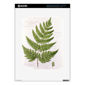Broad Prickly-toothed Buckler Fern, painted at Bra Skin For iPad 3