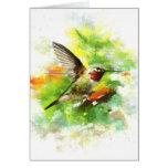 Broad tailed Hummingbird Cards