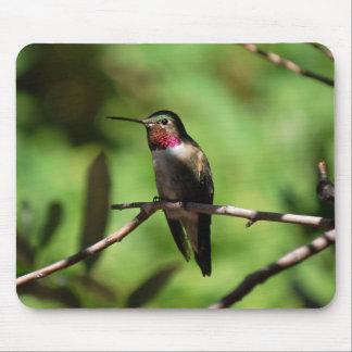 Broad-tailed Hummingbird Mouse Pad