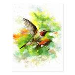 Broad tailed Hummingbird Post Card