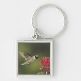 Broad-tailed Hummingbird, Selasphorus 2 Keychain