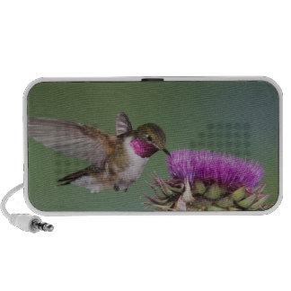 Broad-tailed Hummingbird, Selasphorus 2 Mini Speaker