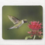 Broad-tailed Hummingbird, Selasphorus 2 Mousepad