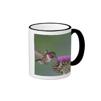 Broad-tailed Hummingbird, Selasphorus 2 Ringer Mug