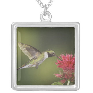 Broad-tailed Hummingbird, Selasphorus 2 Silver Plated Necklace