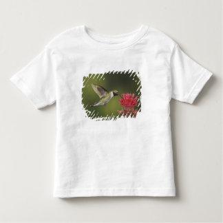 Broad-tailed Hummingbird, Selasphorus 2 T Shirt