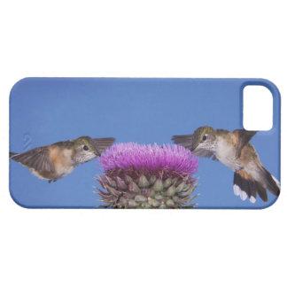 Broad-tailed Hummingbird, Selasphorus iPhone SE/5/5s Case