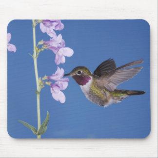 Broad-tailed Hummingbird, Selasphorus Mouse Pad