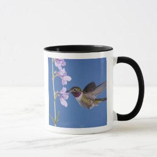 Broad-tailed Hummingbird, Selasphorus Mug