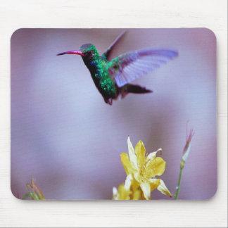 Broadbilled-hummingbird mousepad