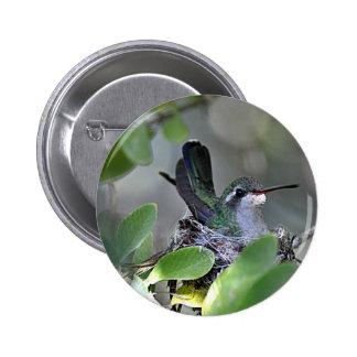 Broadbilled Hummingbird Nesting Buttons