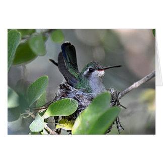 Broadbilled Hummingbird Nesting Greeting Card