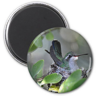 Broadbilled Hummingbird Nesting Magnet
