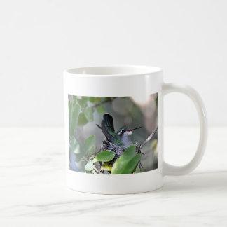 Broadbilled Hummingbird Nesting Classic White Coffee Mug