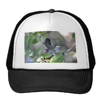 Broadbilled Hummingbird Nesting Trucker Hat