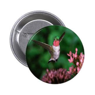 Broadtail Hummingbird Pins