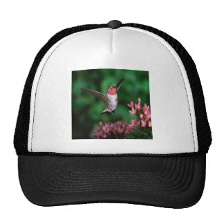 Broadtail Hummingbird Trucker Hats