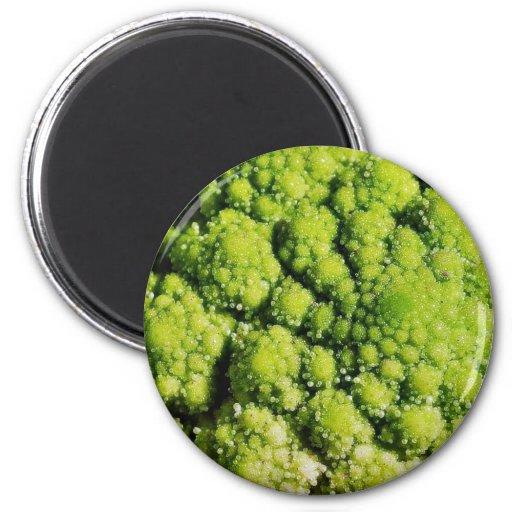 Brocco Flower Vegetable 2 Inch Round Magnet