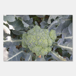 Broccoli Decorative Sign