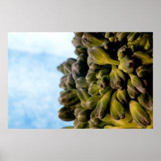 Broccoli Landscape Poster