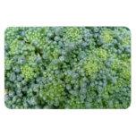 Broccoli Macro Premium Magnet