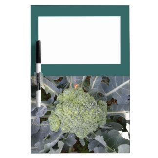 Broccoli Memo Board