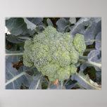 Broccoli Print