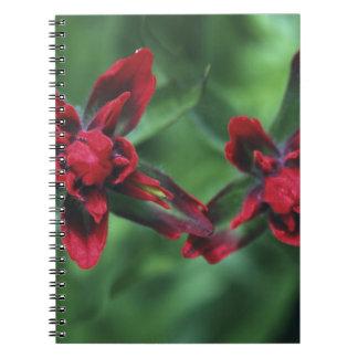 Brocha india, Banff NP, Alberta, Canadá 2 Spiral Notebook