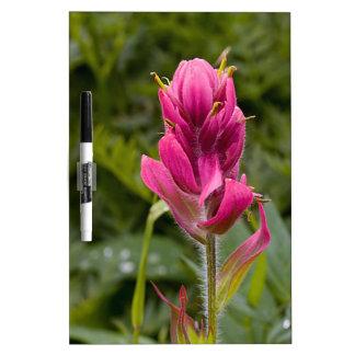 Brocha india rosada pizarras blancas de calidad