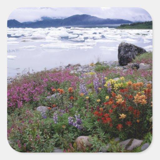 Brocha, Lupine, Fireweed. Icebergs Russell Calcomanía Cuadradase