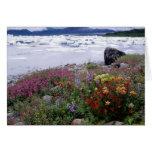 Brocha, Lupine, Fireweed. Icebergs Russell Tarjetón