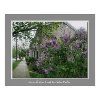 Brockville King Street East Lilac Bushes Posters