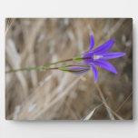 Brodiaea salvaje púrpura de FlowerElegant Placa De Madera